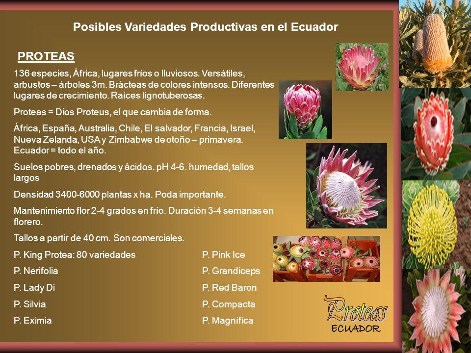 Posibles Variedades Productivas en el Ecuador