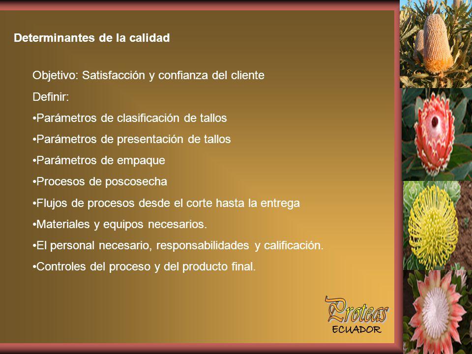 Proteas Determinantes de la calidad