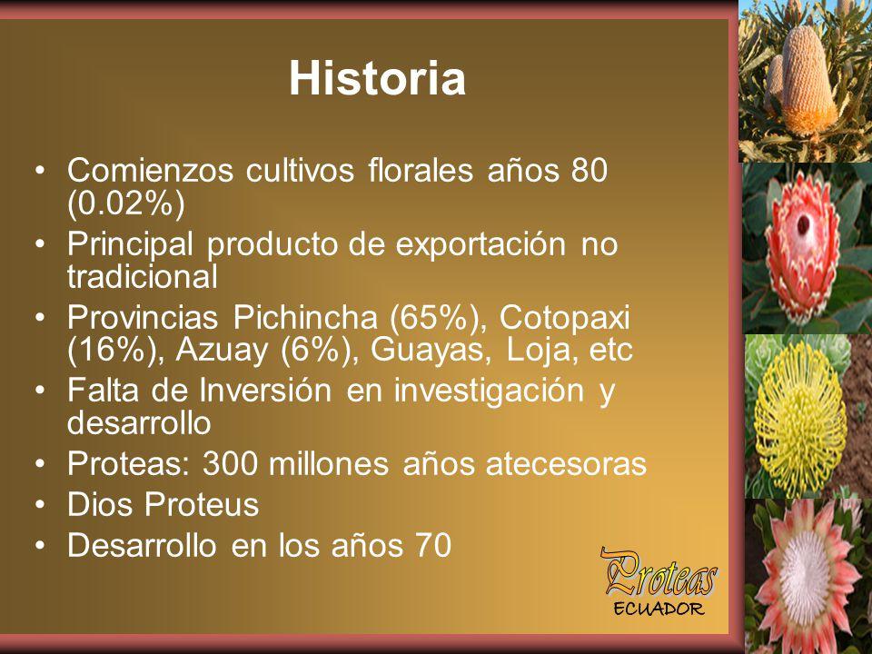 Historia Proteas Comienzos cultivos florales años 80 (0.02%)