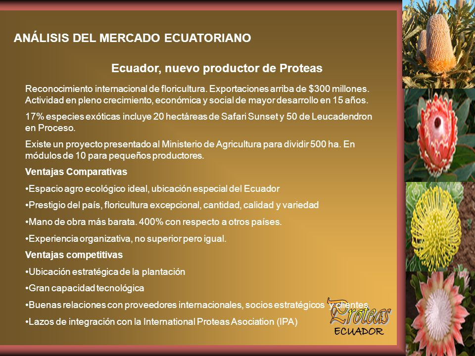 Proteas ANÁLISIS DEL MERCADO ECUATORIANO