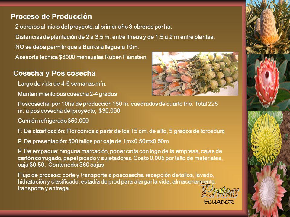 Proteas Proceso de Producción Cosecha y Pos cosecha