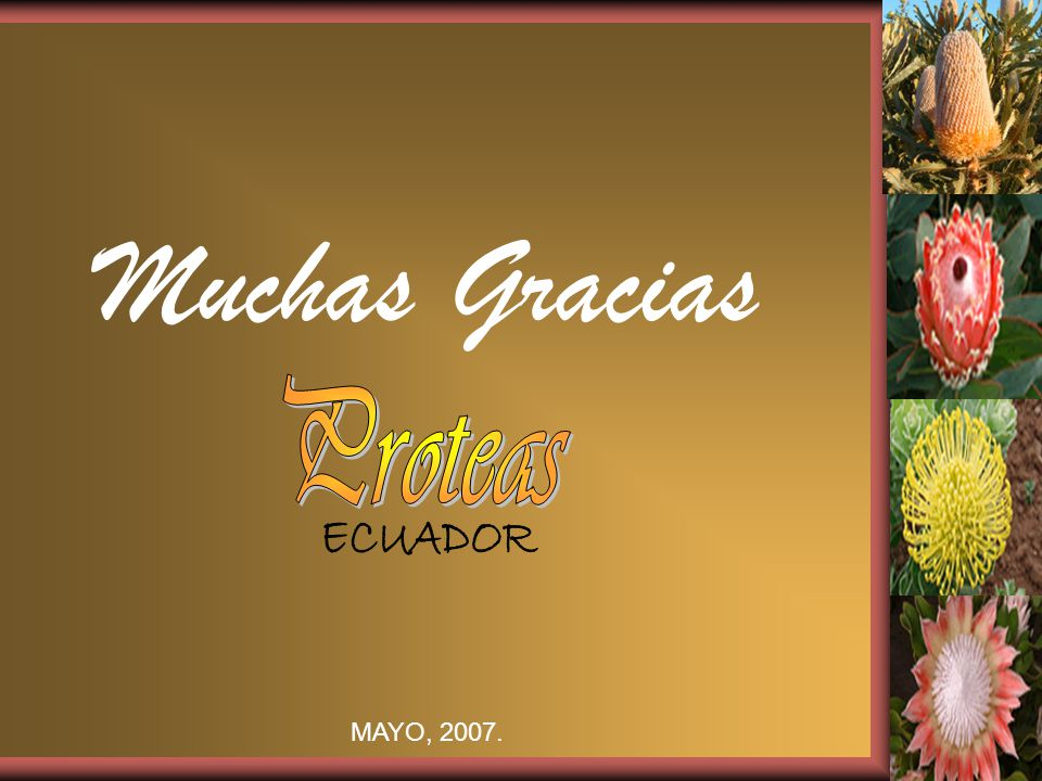 Muchas Gracias Proteas ECUADOR MAYO, 2007.