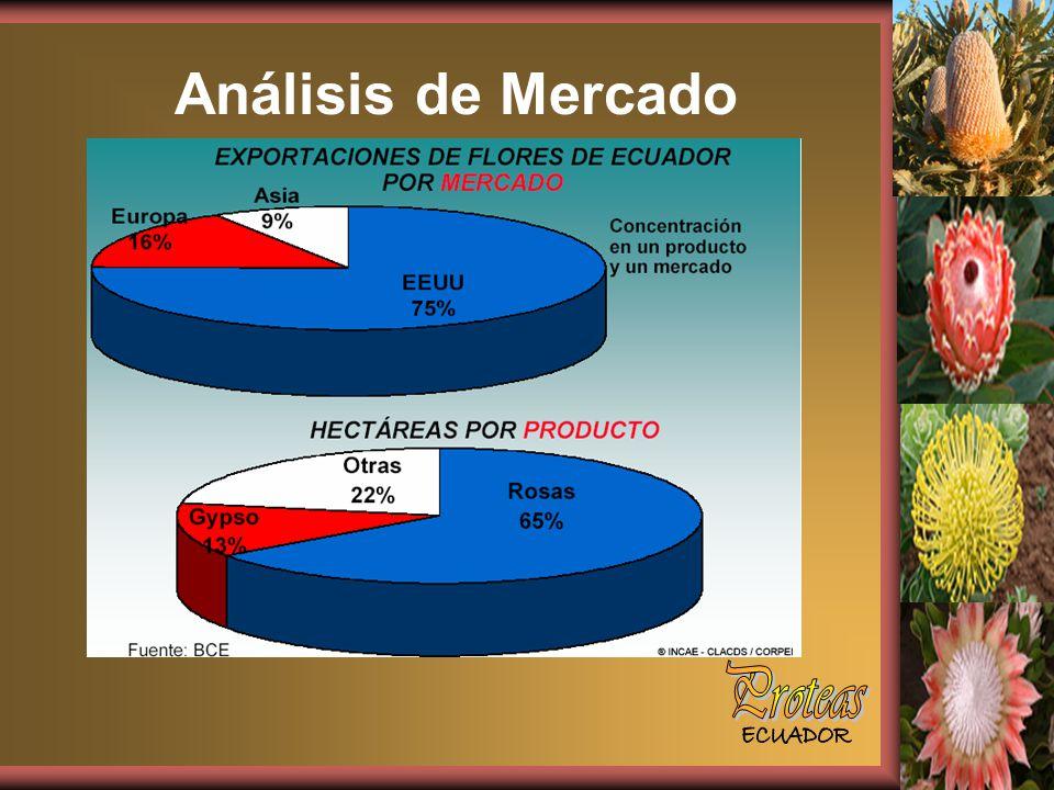 Análisis de Mercado Proteas ECUADOR