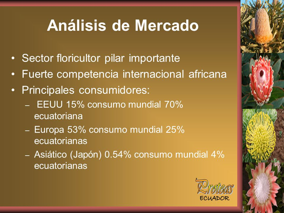 Análisis de Mercado Proteas Sector floricultor pilar importante