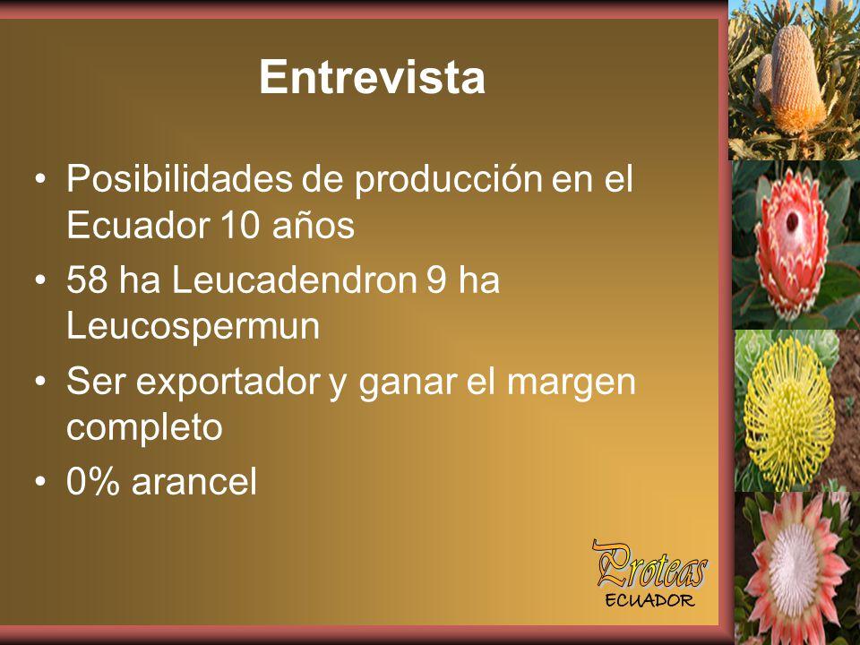 Entrevista Proteas Posibilidades de producción en el Ecuador 10 años