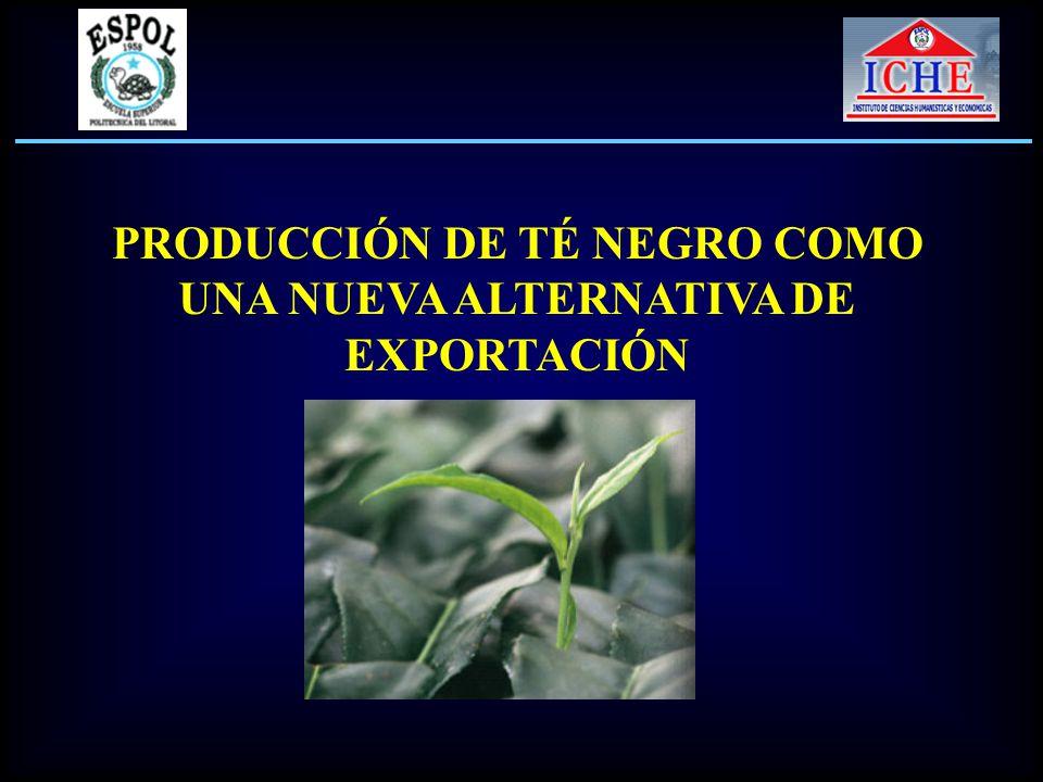PRODUCCIÓN DE TÉ NEGRO COMO UNA NUEVA ALTERNATIVA DE EXPORTACIÓN