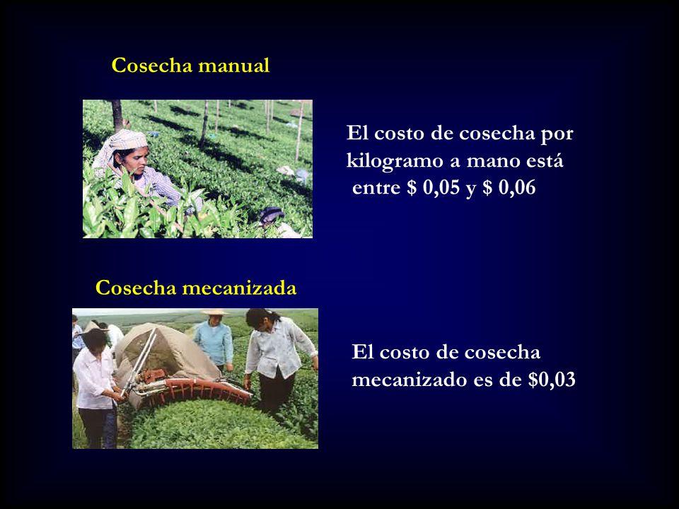 Cosecha manual El costo de cosecha por. kilogramo a mano está. entre $ 0,05 y $ 0,06. Cosecha mecanizada.