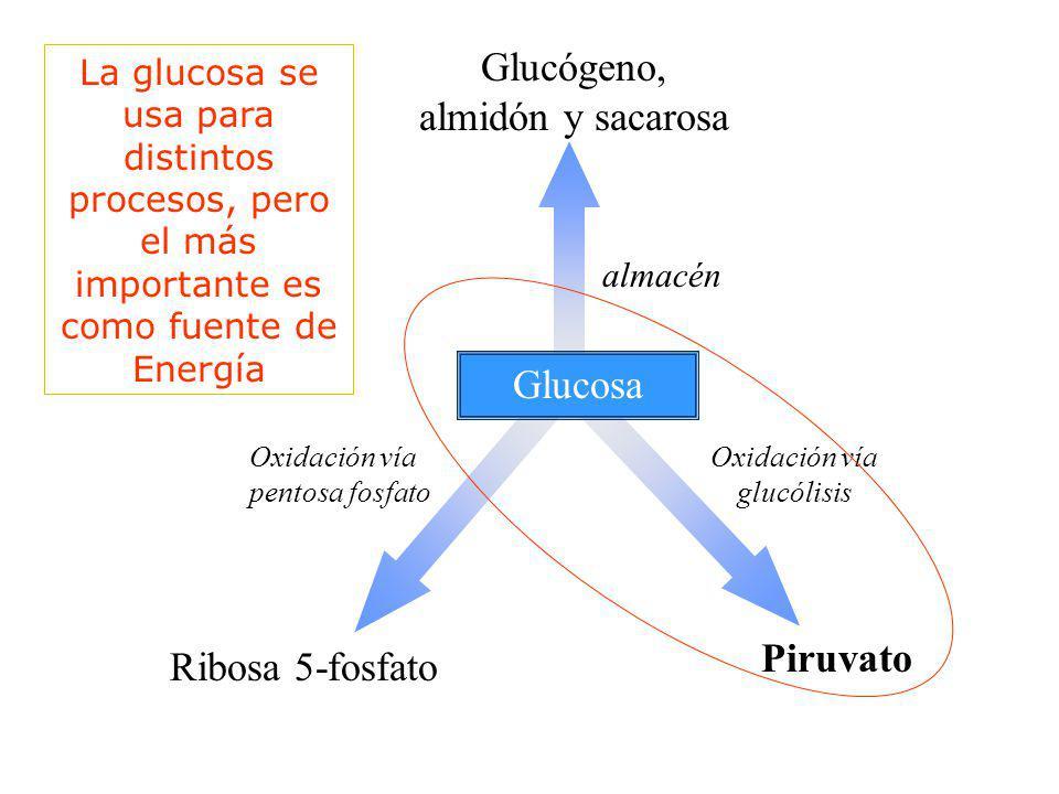 Glucógeno, almidón y sacarosa