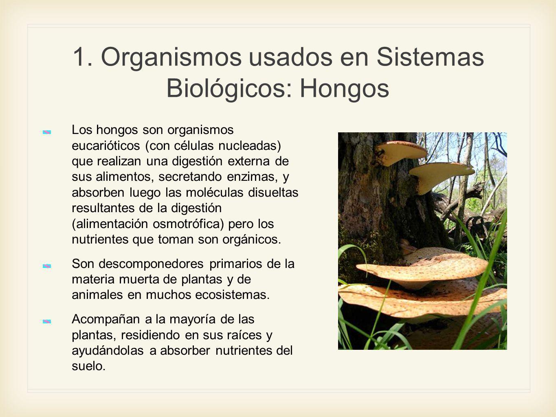 1. Organismos usados en Sistemas Biológicos: Hongos