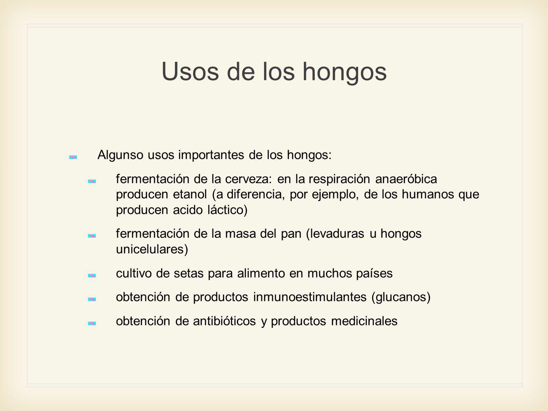 Usos de los hongos Algunso usos importantes de los hongos: