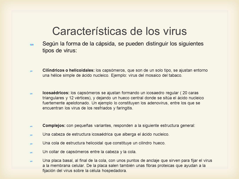 Características de los virus