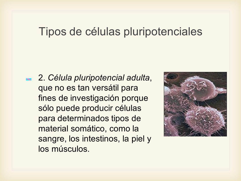 Tipos de células pluripotenciales