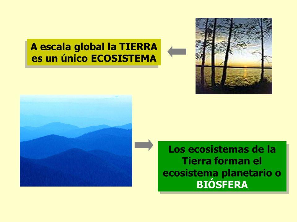 A escala global la TIERRA es un único ECOSISTEMA