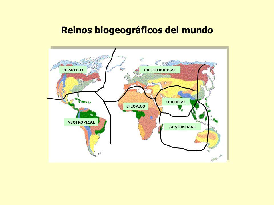 Reinos biogeográficos del mundo