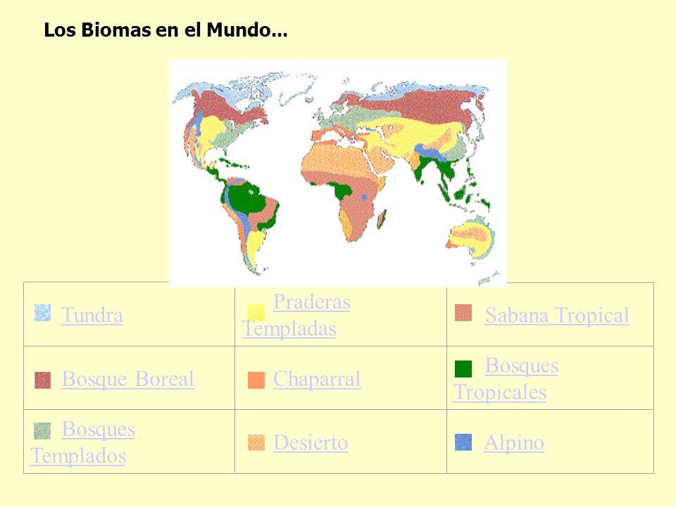 Tundra Praderas Templadas Sabana Tropical Bosque Boreal Chaparral