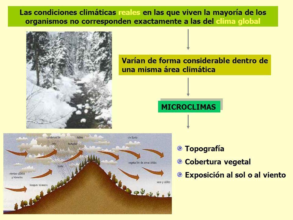 Las condiciones climáticas reales en las que viven la mayoría de los organismos no corresponden exactamente a las del clima global