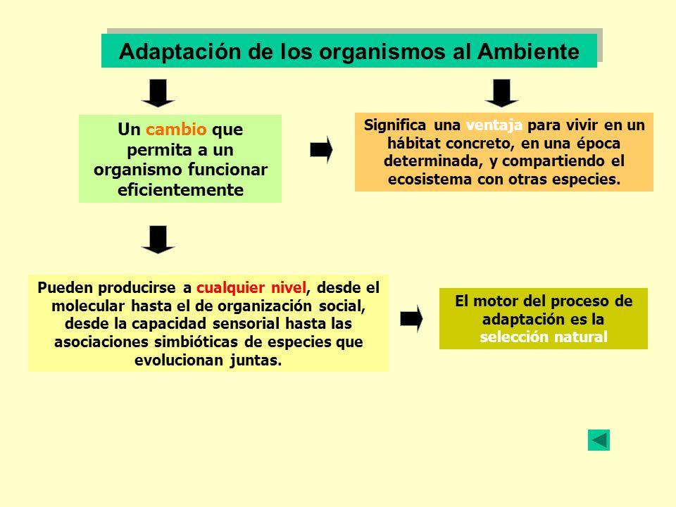 Adaptación de los organismos al Ambiente