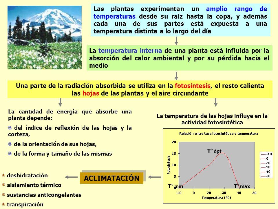 La temperatura de las hojas influye en la actividad fotosintética