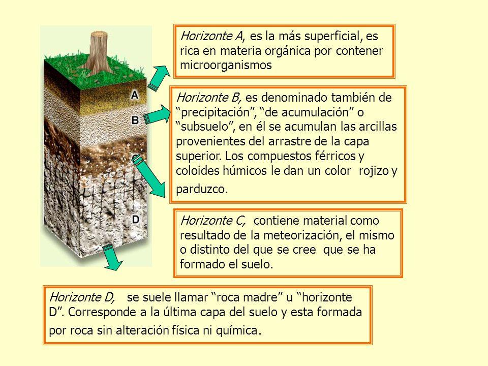 Horizonte A, es la más superficial, es rica en materia orgánica por contener microorganismos