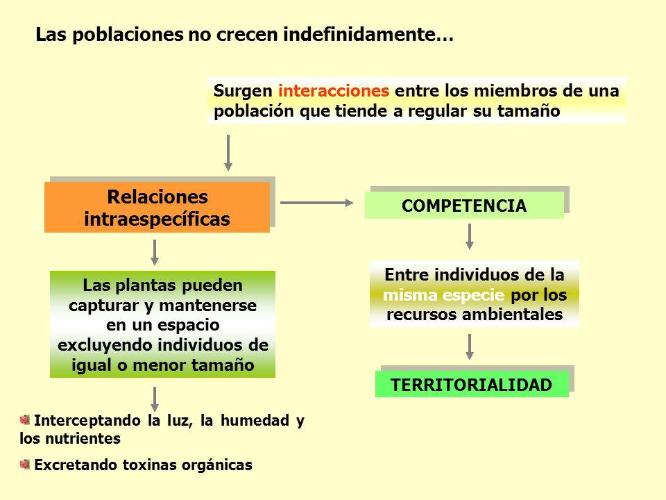 Relaciones intraespecíficas