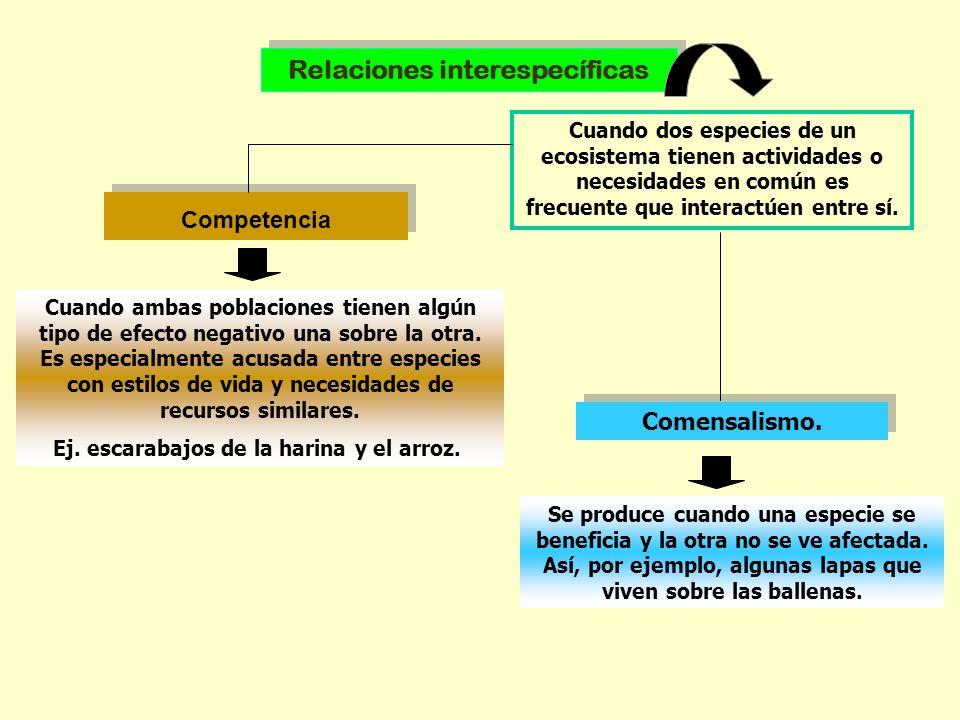 Relaciones interespecíficas Ej. escarabajos de la harina y el arroz.