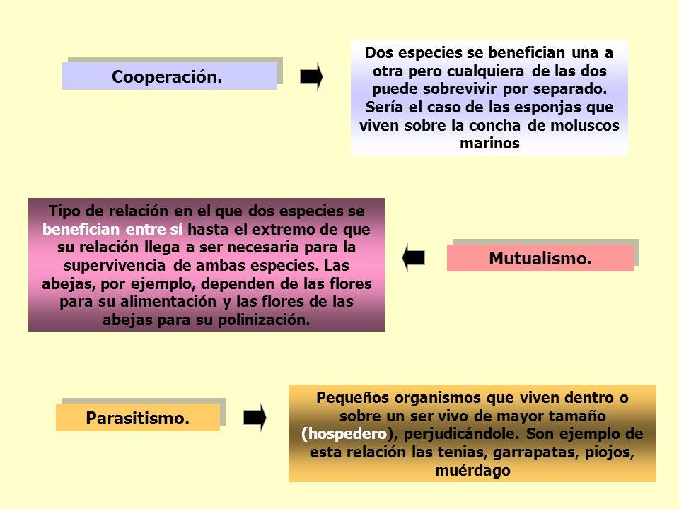Cooperación. Mutualismo. Parasitismo.