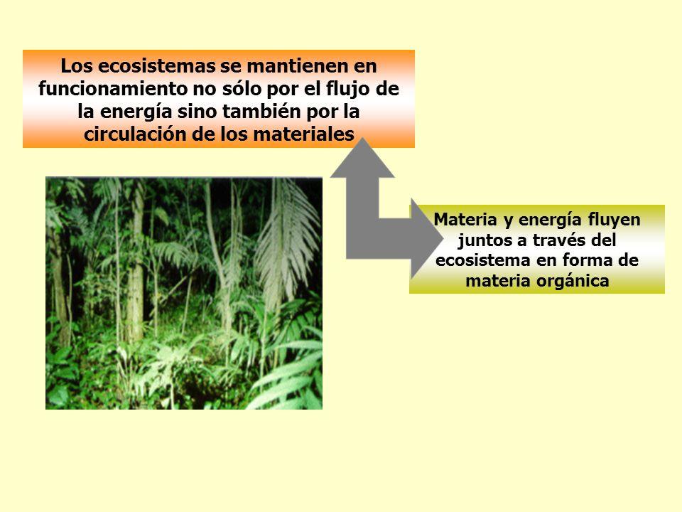 Los ecosistemas se mantienen en funcionamiento no sólo por el flujo de la energía sino también por la circulación de los materiales