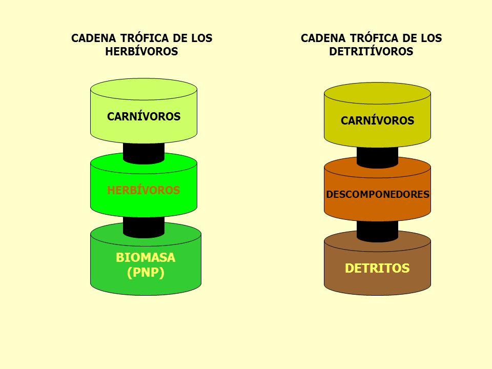CADENA TRÓFICA DE LOS HERBÍVOROS CADENA TRÓFICA DE LOS DETRITÍVOROS