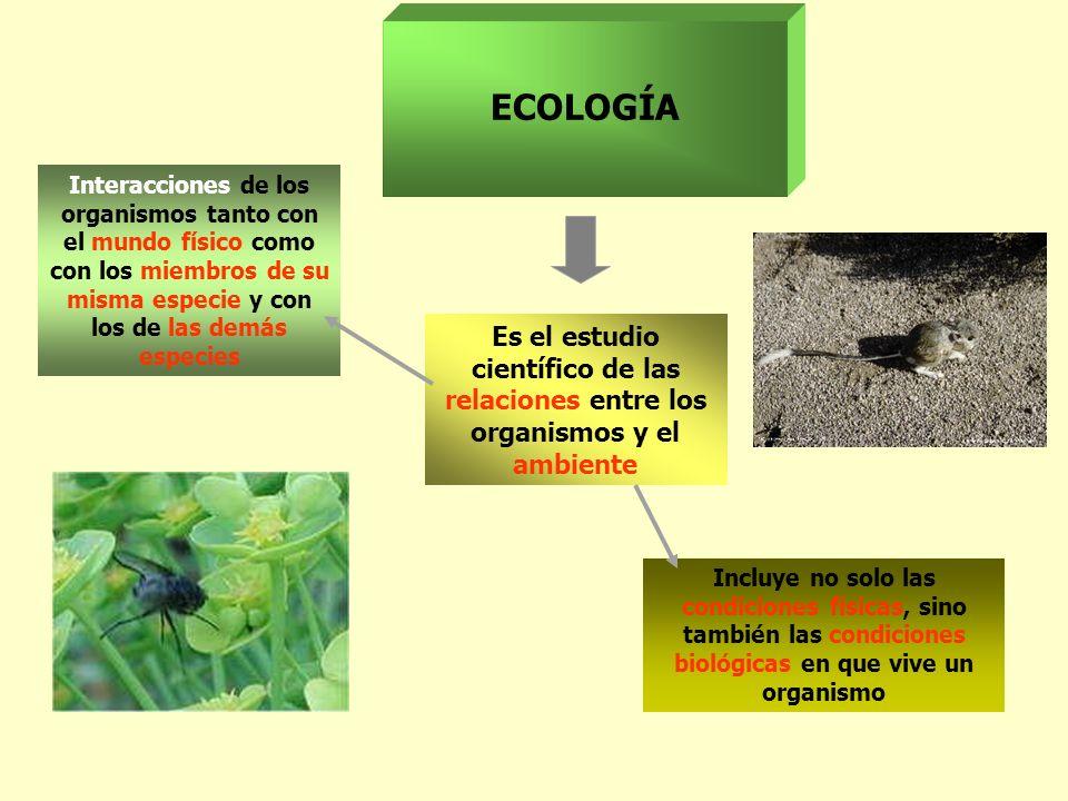 ECOLOGÍA Interacciones de los organismos tanto con el mundo físico como con los miembros de su misma especie y con los de las demás especies.