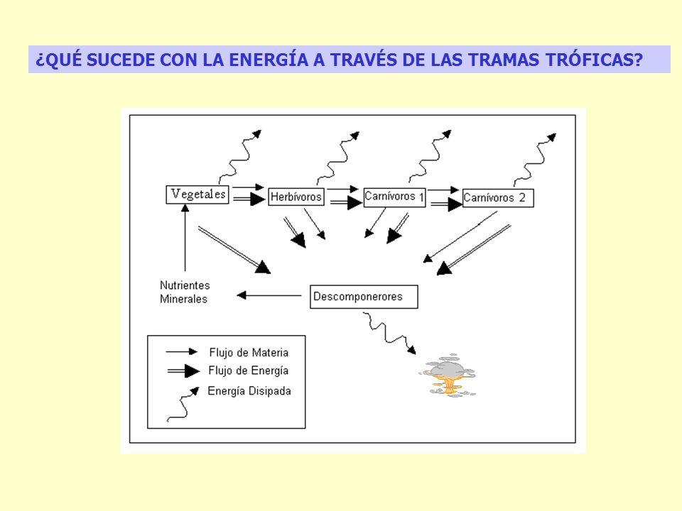 ¿QUÉ SUCEDE CON LA ENERGÍA A TRAVÉS DE LAS TRAMAS TRÓFICAS