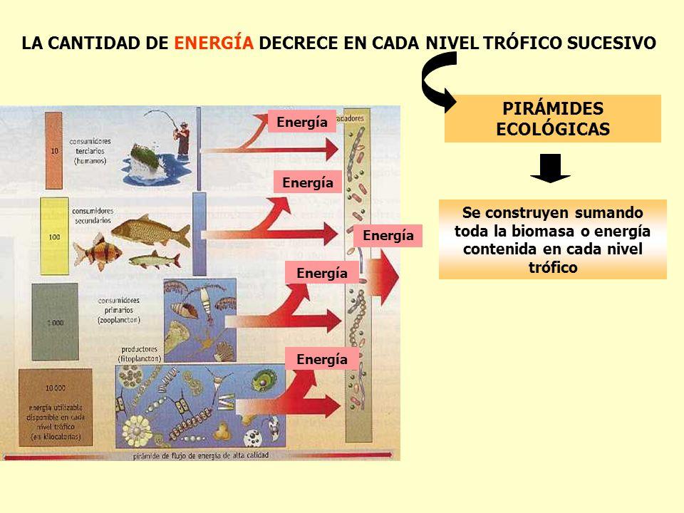 LA CANTIDAD DE ENERGÍA DECRECE EN CADA NIVEL TRÓFICO SUCESIVO