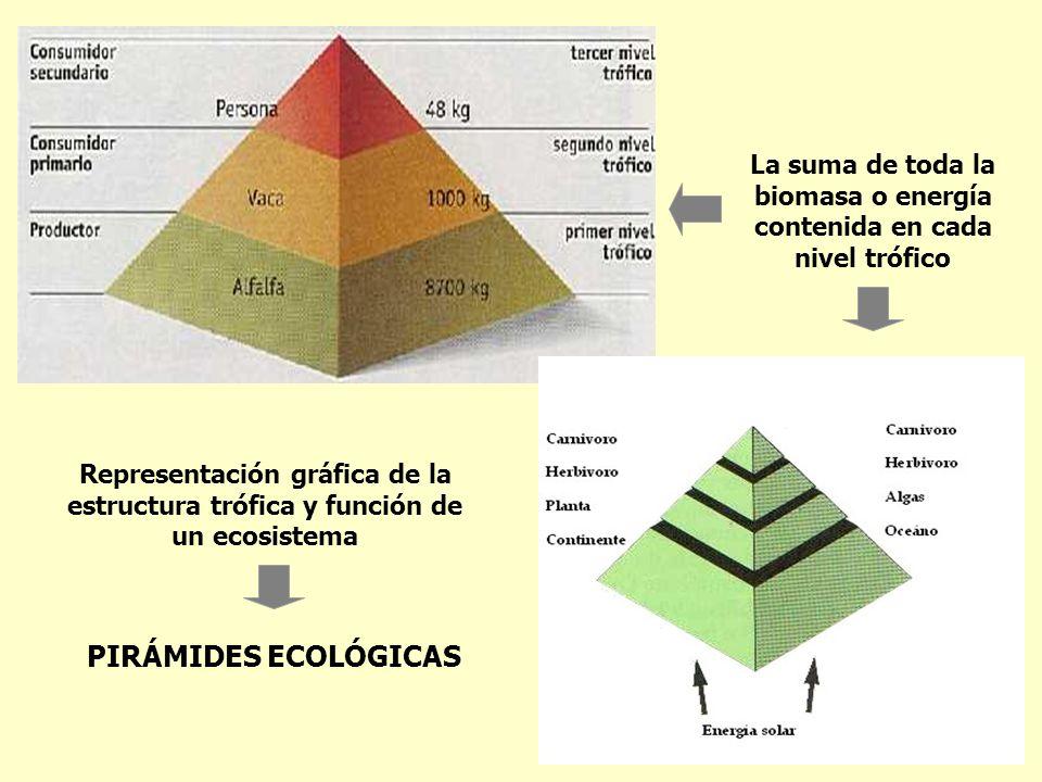 La suma de toda la biomasa o energía contenida en cada nivel trófico