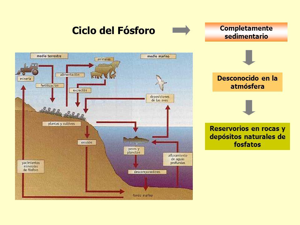 Ciclo del Fósforo Completamente sedimentario