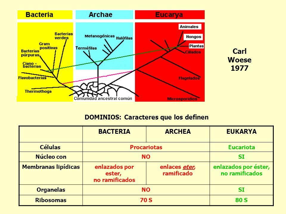 Carl Woese 1977 DOMINIOS: Caracteres que los definen BACTERIA ARCHEA