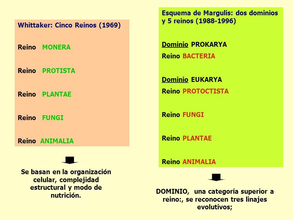 Esquema de Margulis: dos dominios y 5 reinos (1988-1996)