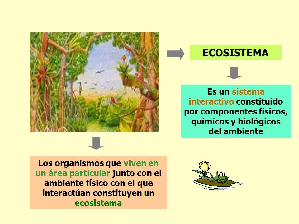 ECOSISTEMA Es un sistema interactivo constituido por componentes físicos, químicos y biológicos del ambiente.
