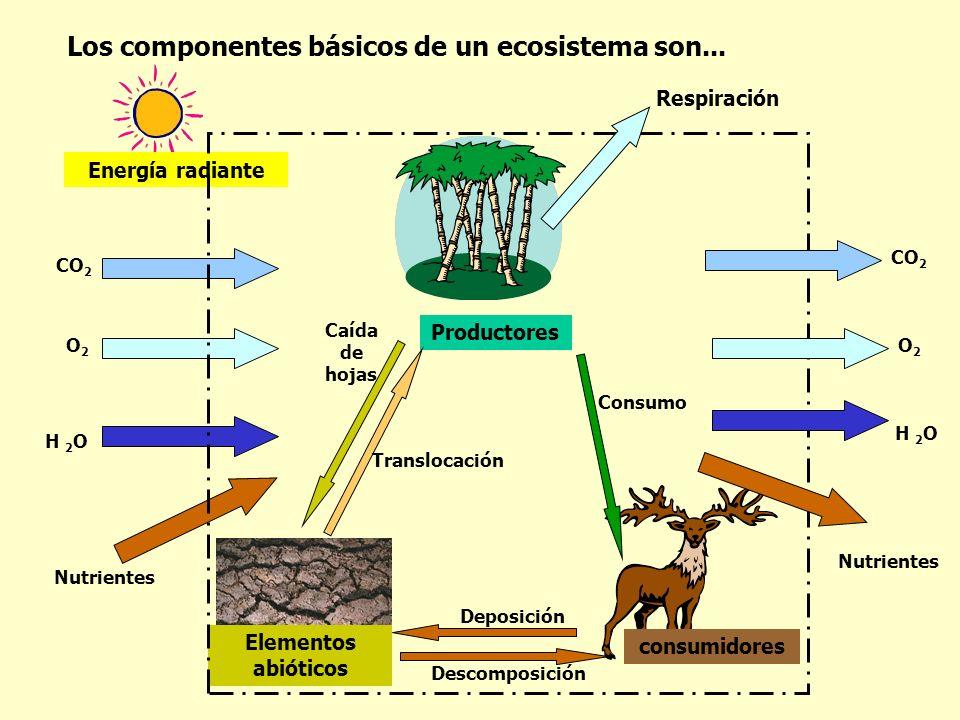 Los componentes básicos de un ecosistema son...