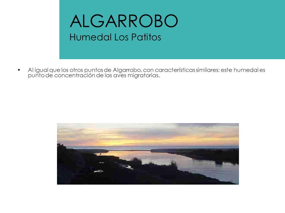 ALGARROBO Humedal Los Patitos