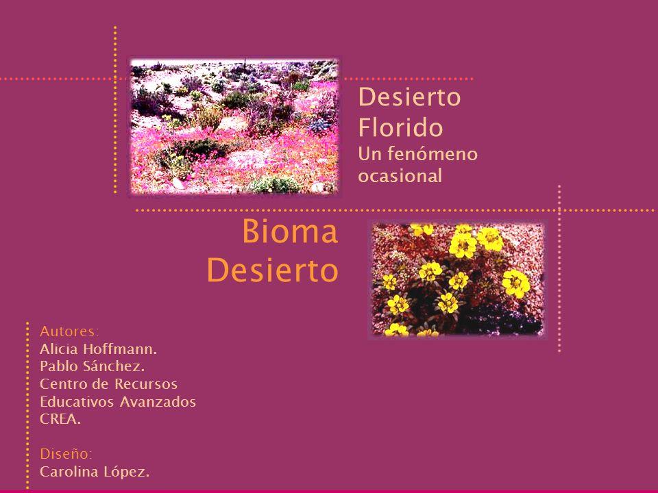 Desierto Florido Bioma Desierto Un fenómeno ocasional Autores: