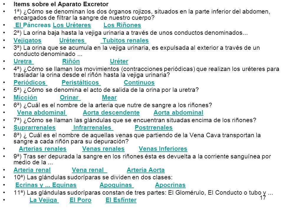 Items sobre el Aparato Excretor