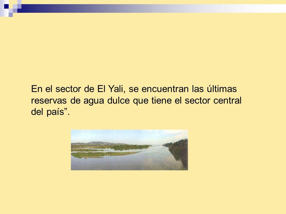 En el sector de El Yali, se encuentran las últimas reservas de agua dulce que tiene el sector central del país .