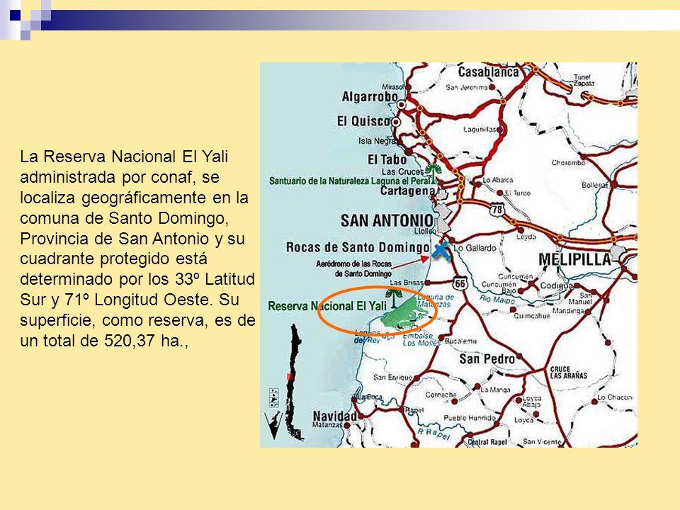 La Reserva Nacional El Yali administrada por conaf, se localiza geográficamente en la comuna de Santo Domingo, Provincia de San Antonio y su cuadrante protegido está determinado por los 33º Latitud Sur y 71º Longitud Oeste.
