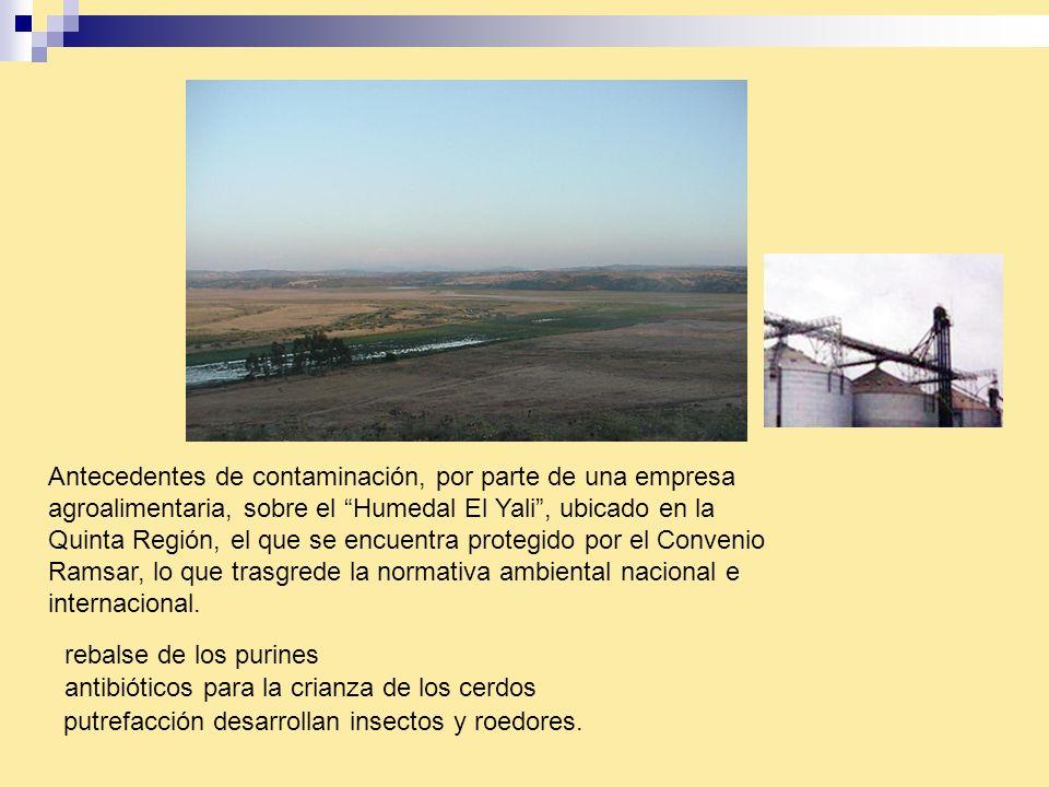 Antecedentes de contaminación, por parte de una empresa agroalimentaria, sobre el Humedal El Yali , ubicado en la Quinta Región, el que se encuentra protegido por el Convenio Ramsar, lo que trasgrede la normativa ambiental nacional e internacional.