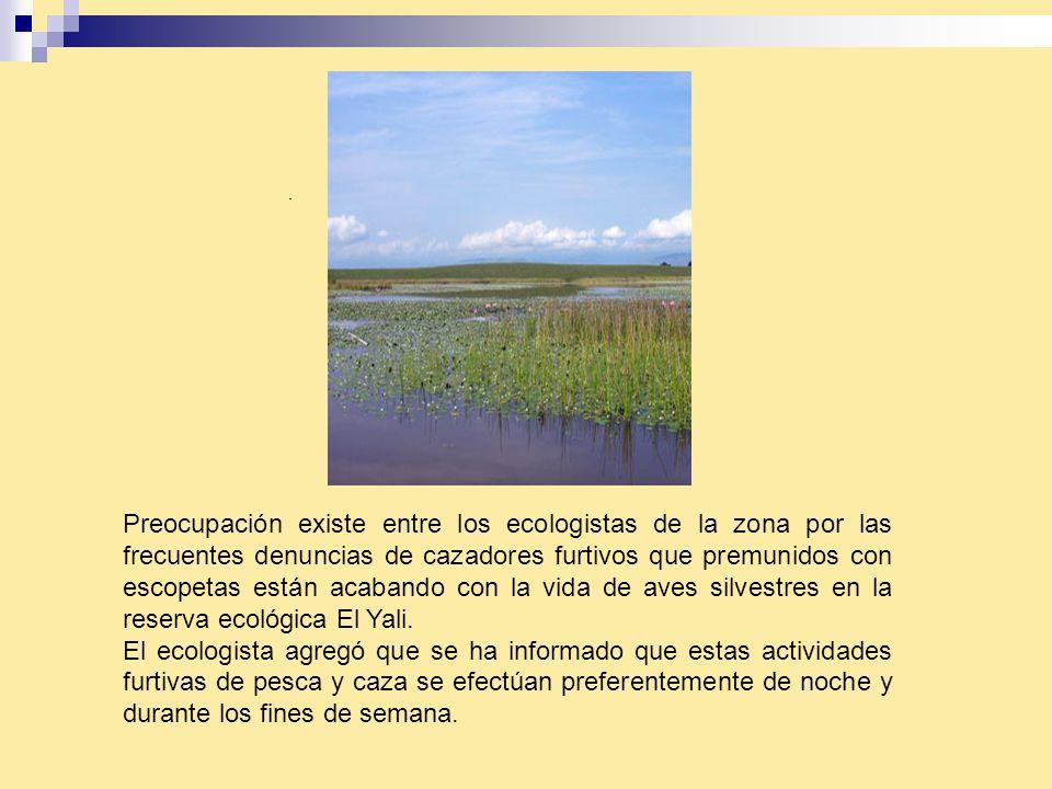 Preocupación existe entre los ecologistas de la zona por las frecuentes denuncias de cazadores furtivos que premunidos con escopetas están acabando con la vida de aves silvestres en la reserva ecológica El Yali.