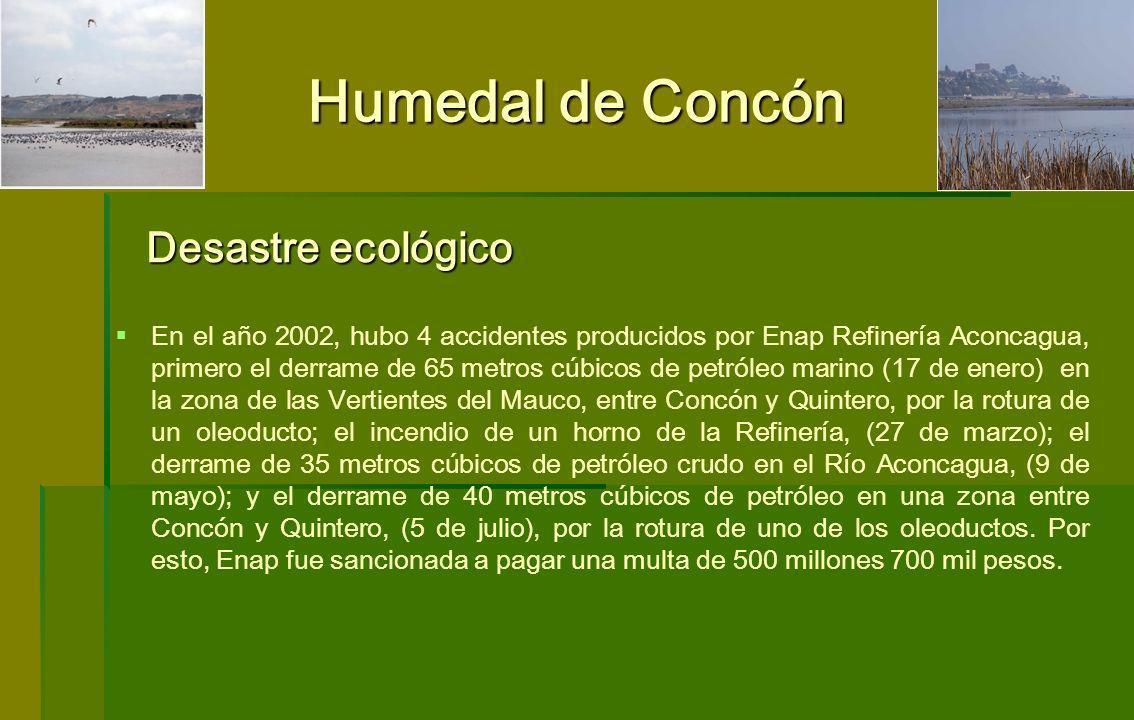 Humedal de Concón Desastre ecológico
