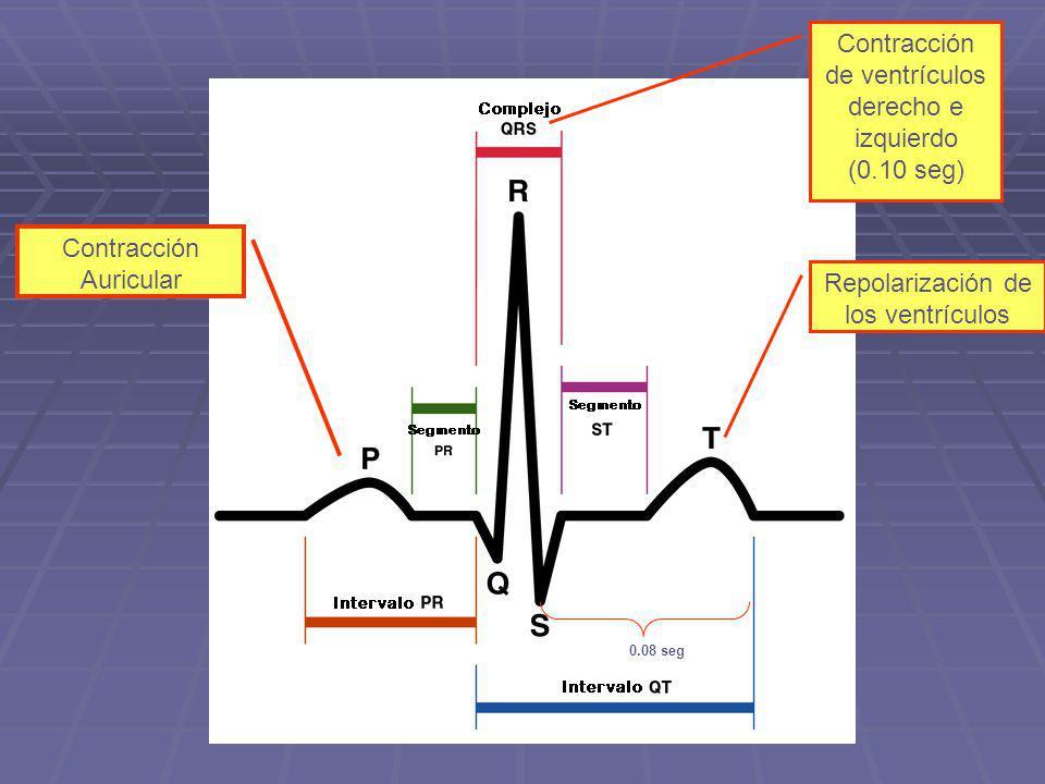 Contracción de ventrículos derecho e izquierdo
