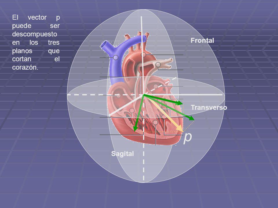 El vector p puede ser descompuesto en los tres planos que cortan el corazón.
