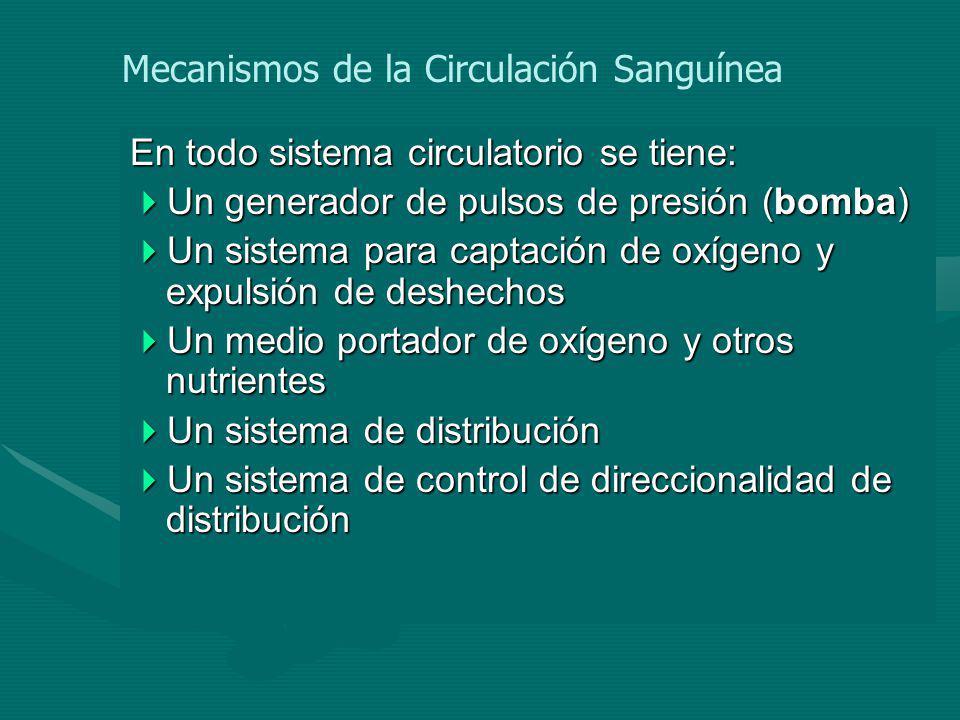 Mecanismos de la Circulación Sanguínea