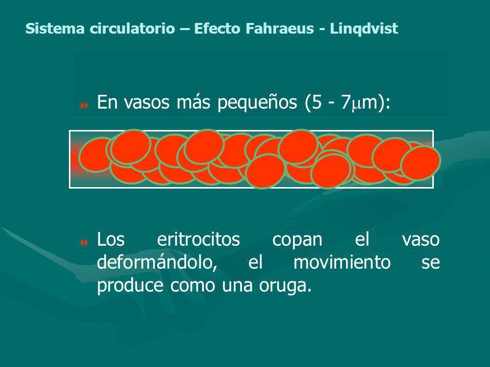 En vasos más pequeños (5 - 7m):