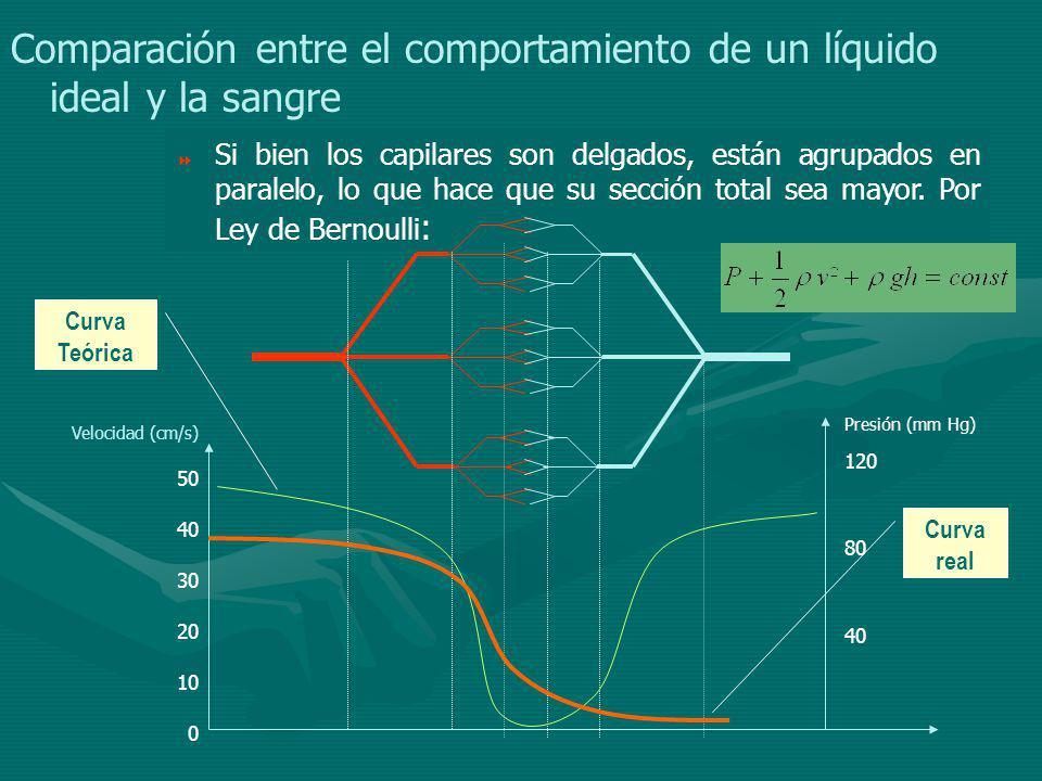 Comparación entre el comportamiento de un líquido ideal y la sangre